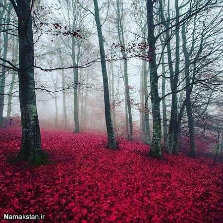 جملات پاییز,اس ام اس پاییز,شعر پاییز